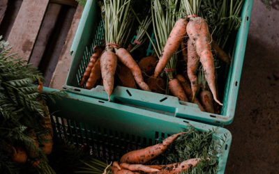 Winter CSA Shares Now Available